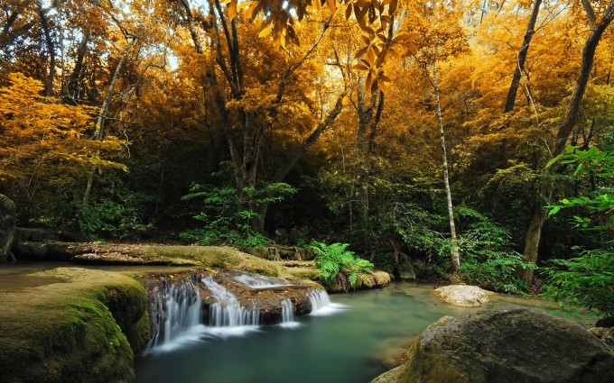 forest autumn waterfall
