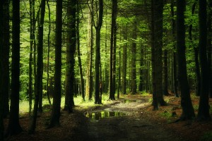 forest background hd A2