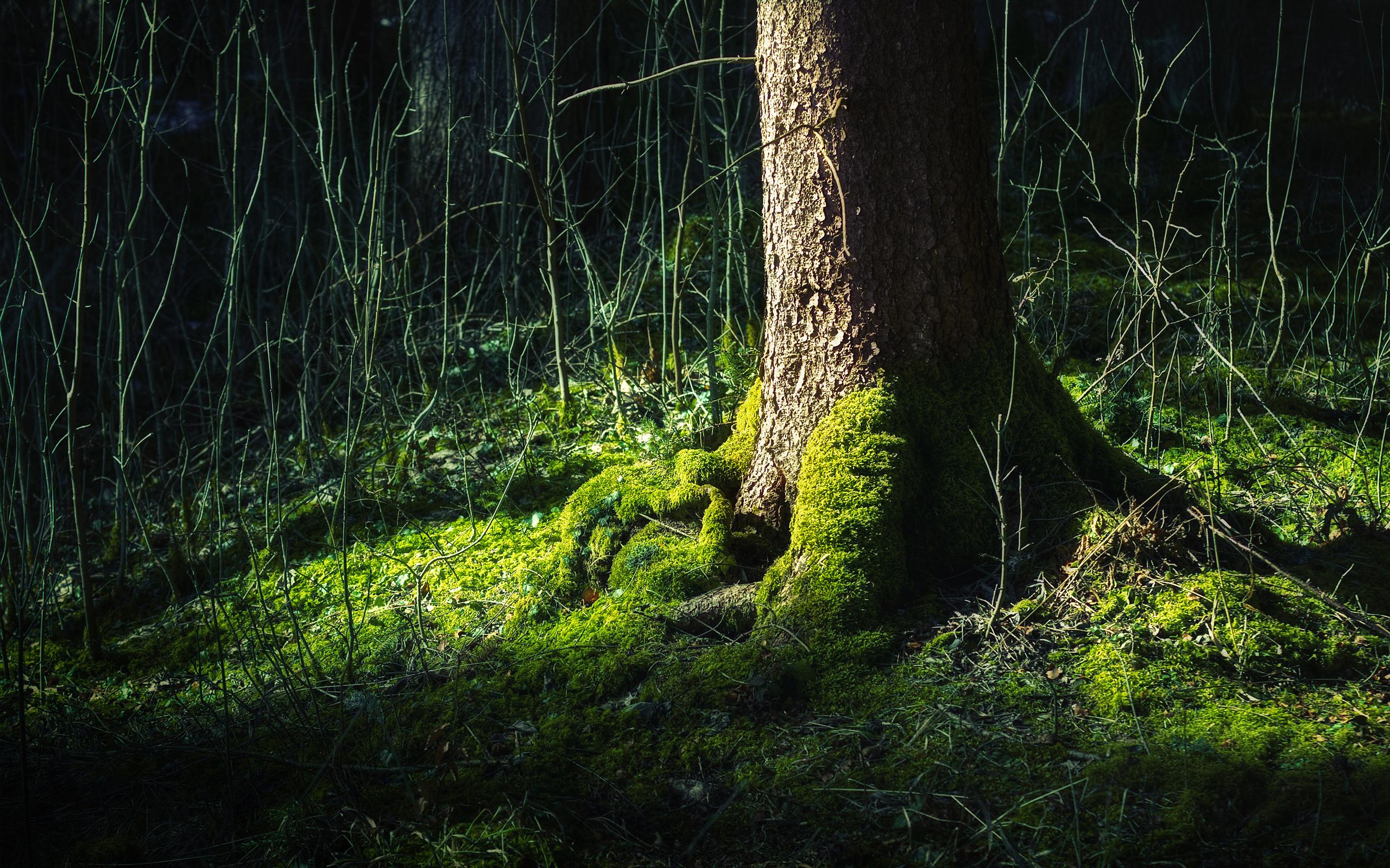 forest backgrounds desktop