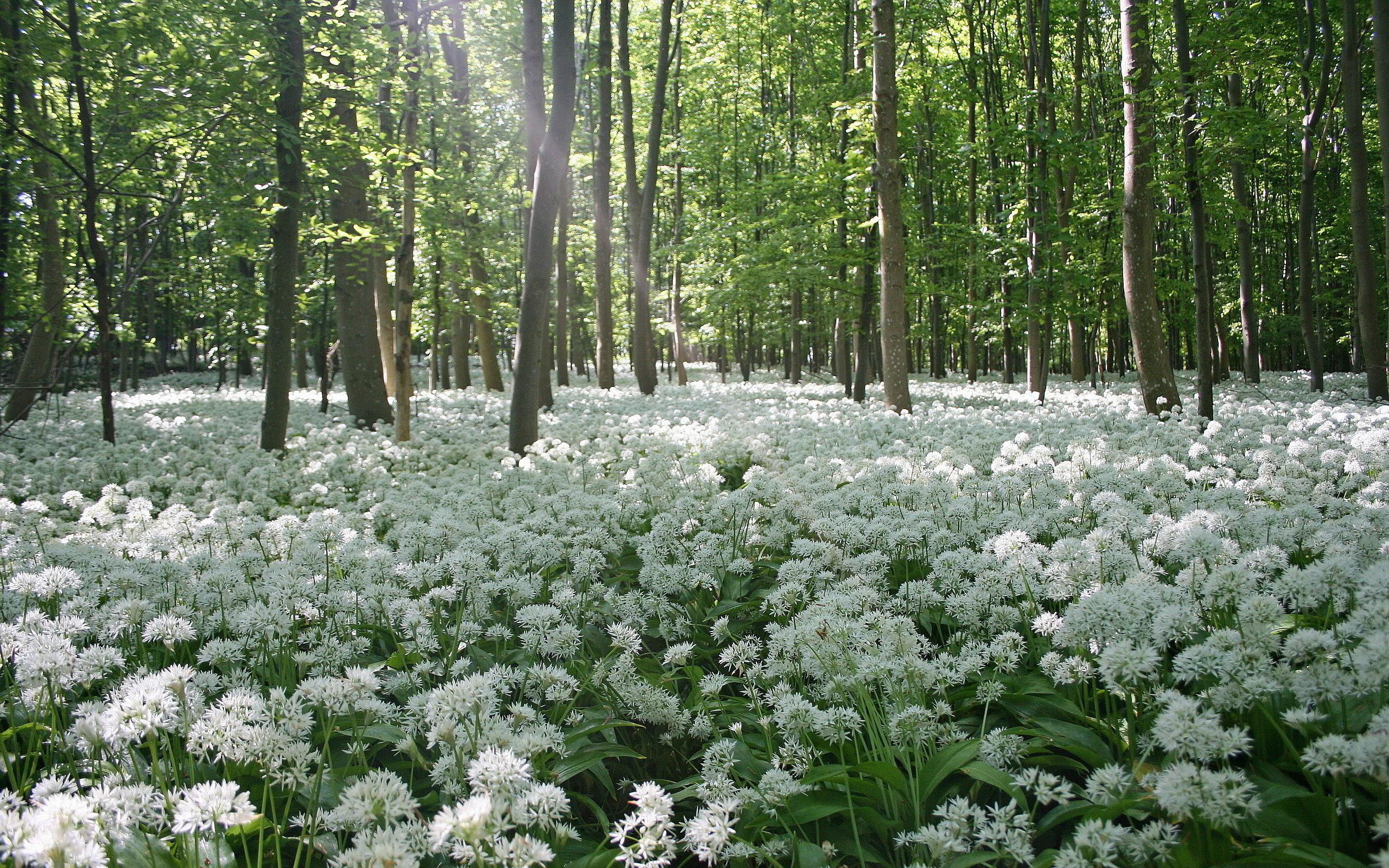 forest flower bakcground