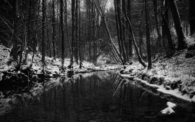 forest hd wallpaper dark