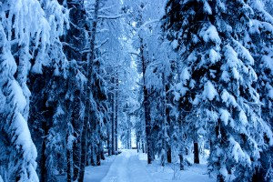 forest hd wallpaper snow