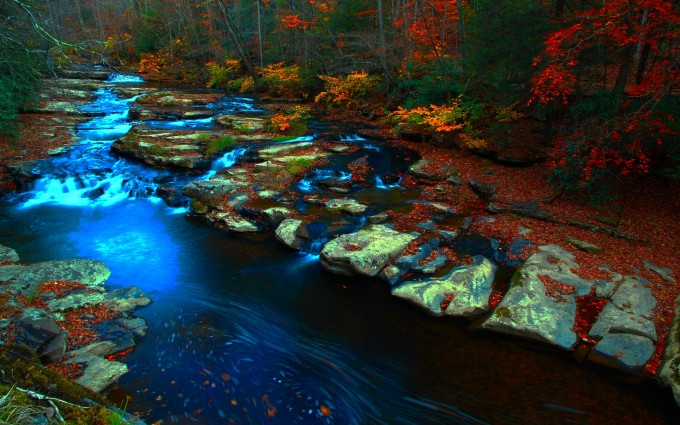 Forestwander.com