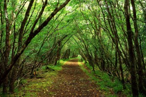 forest path wallpaper cool