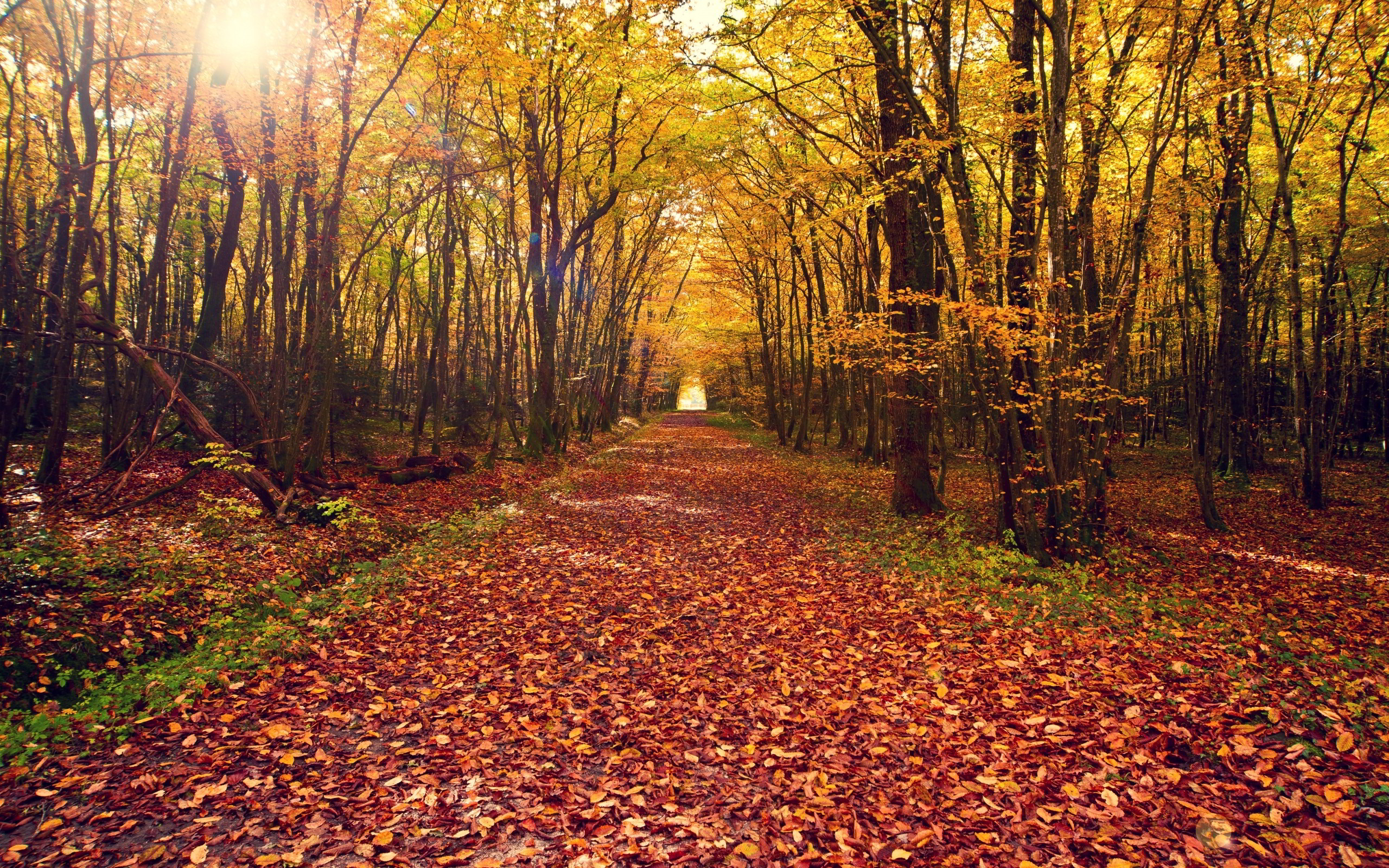 forest path wallpaper hda4