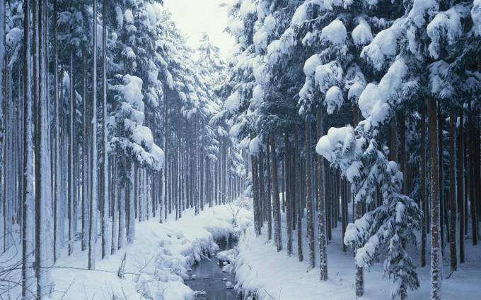 forest path wallpaper stunning