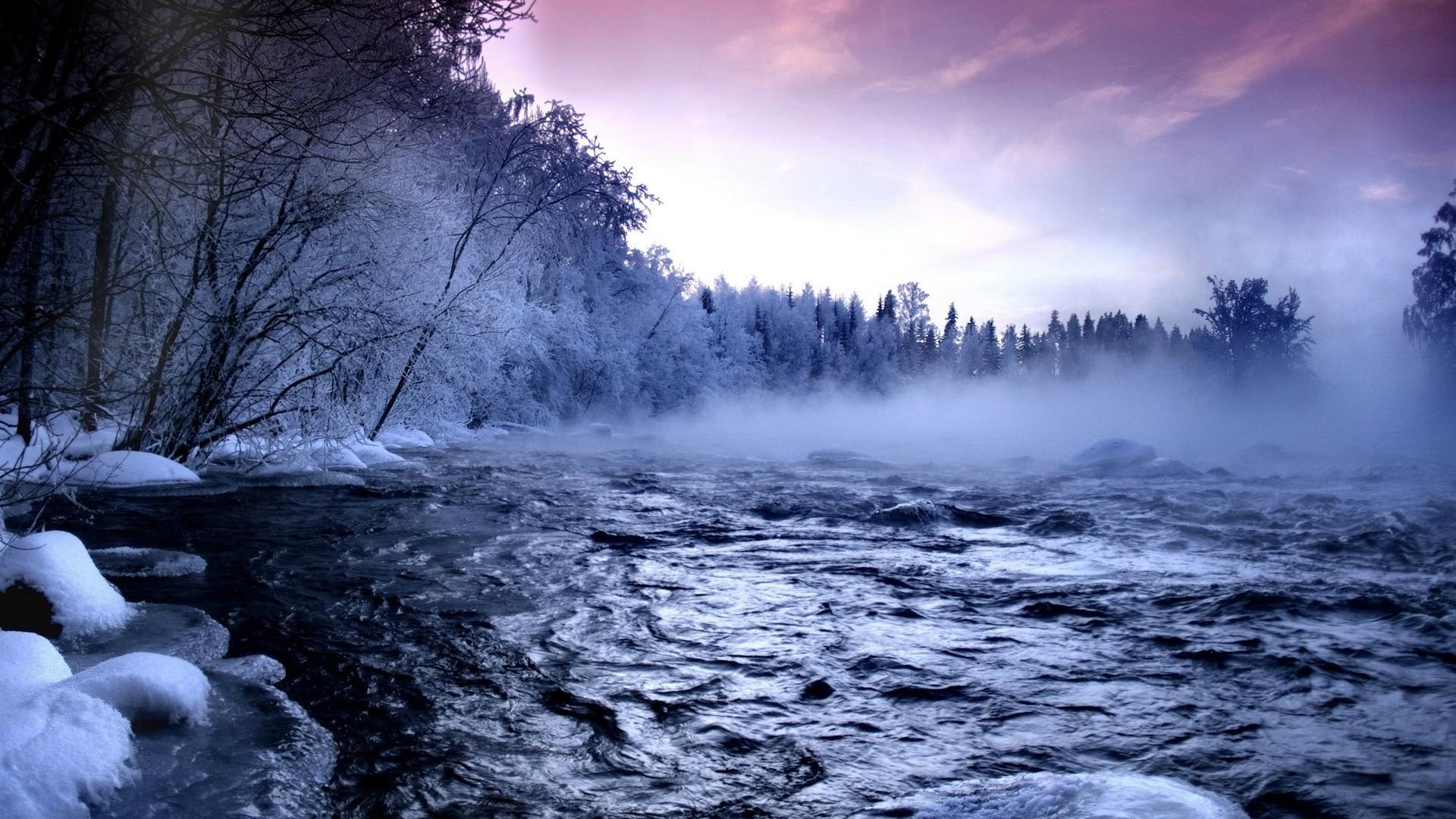 forest photos frozen