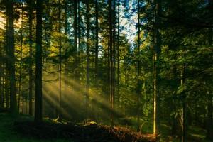 forest photos moss