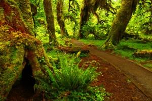 forest photos path hd