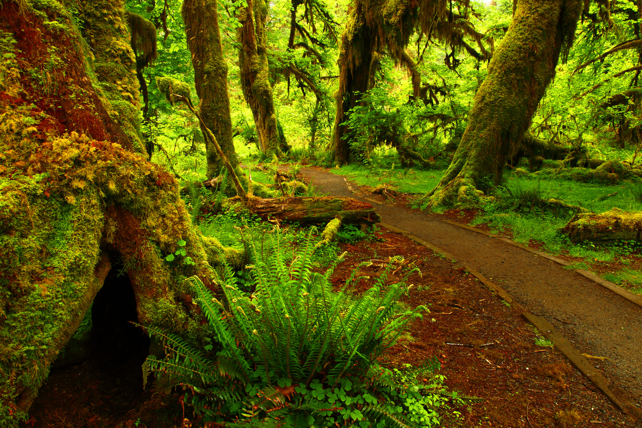 forest photos path hd