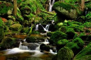 forest photos stream