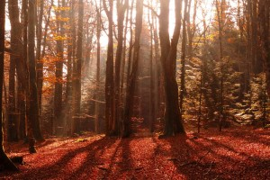 forest red images hd