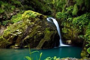 forest river wallpaper desktop
