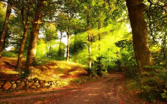 forest road hd desktop