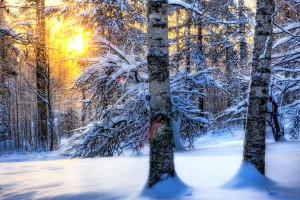 forest scenes wallpaper winter