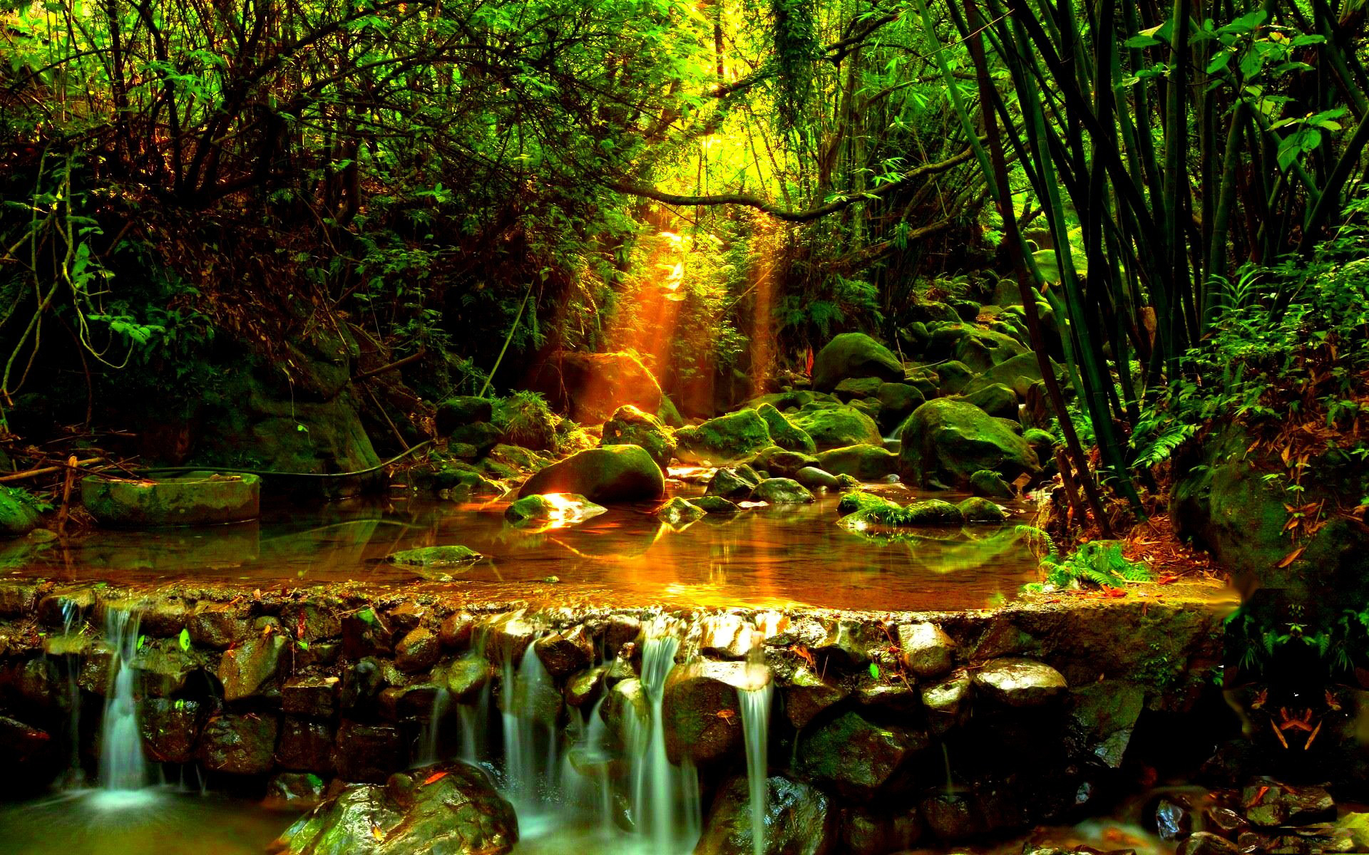 forest stream images