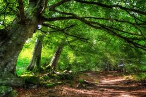 forest summer sunshine
