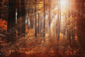 forest sunrays images