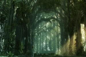 forest wallpaper A2