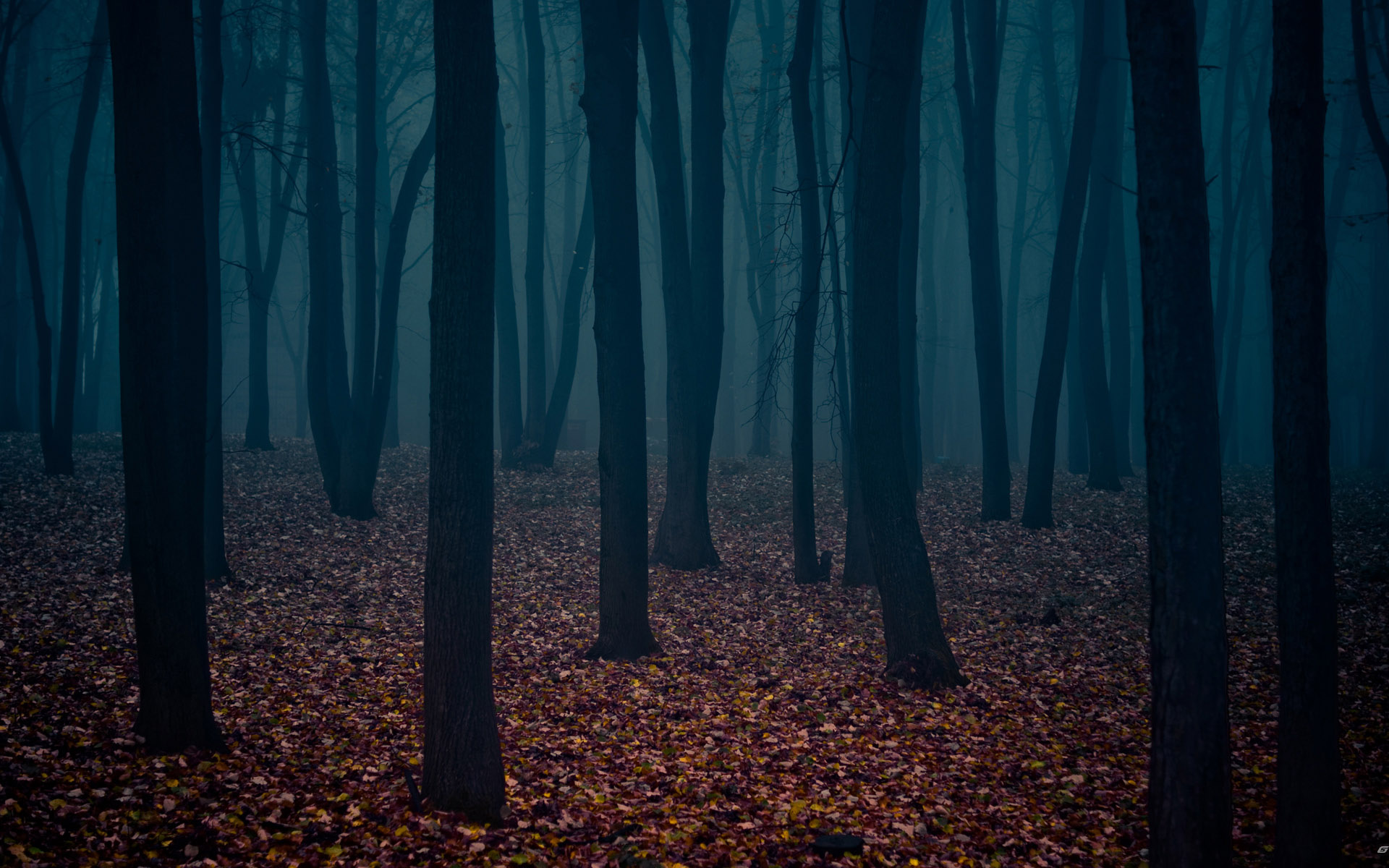 Forest Wallpaper Dark Scary
