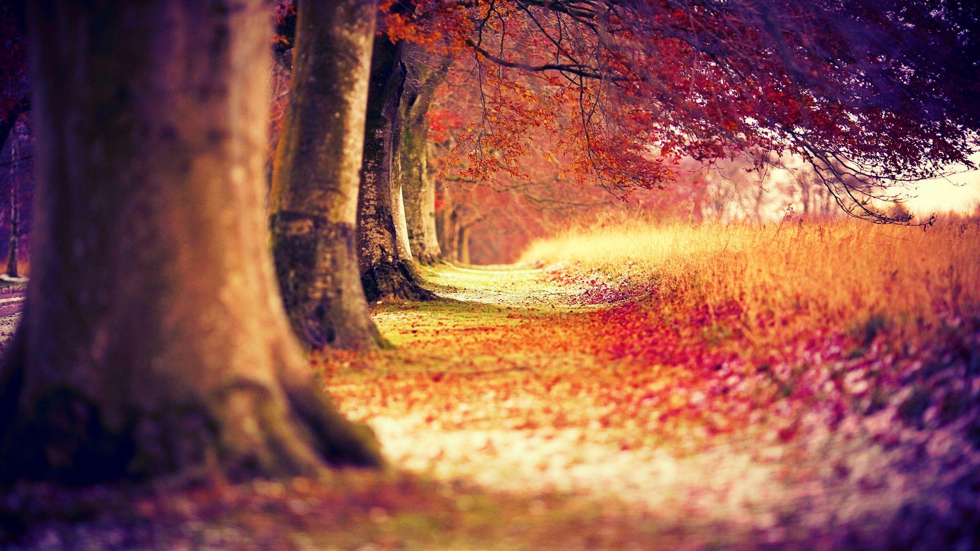 Forest Wallpaper Dark Scary - HD Desktop Wallpapers