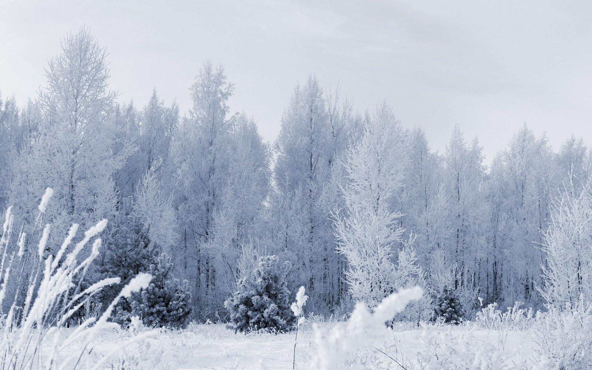 forest wallpaper frozen