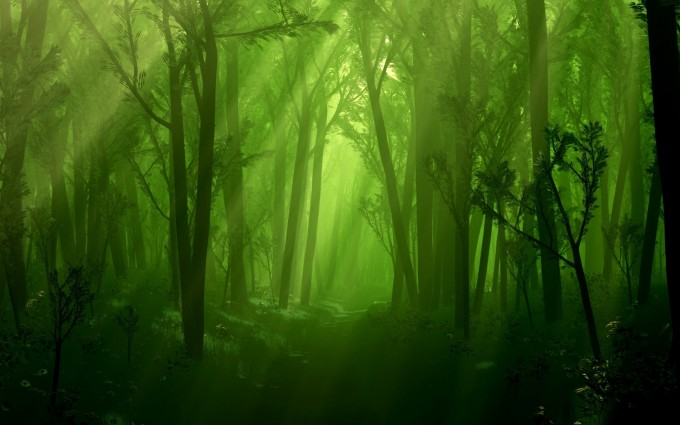 forest wallpaper green