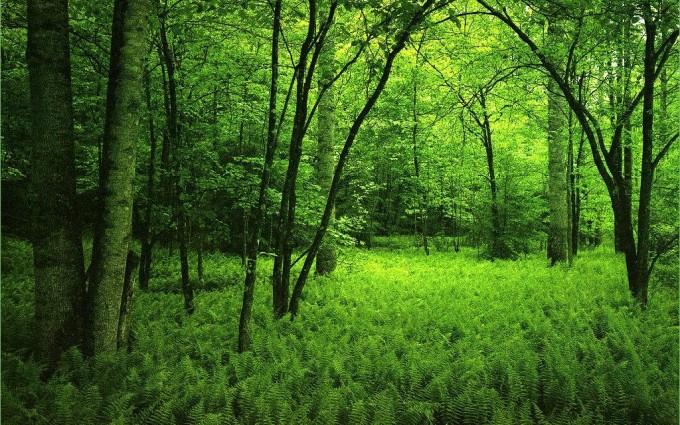 forest wallpaper green hd
