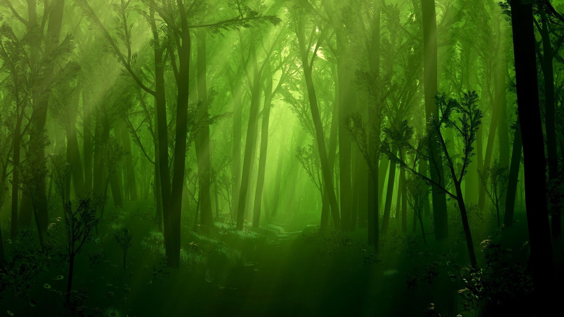 forest wallpaper green