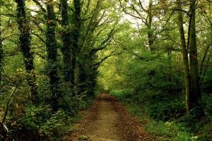 forest wallpaper hd A1