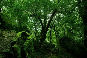 forest wallpaper moss