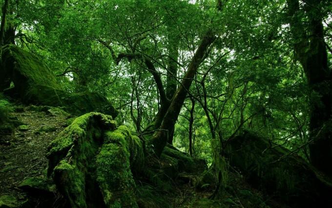 forest wallpaper moss