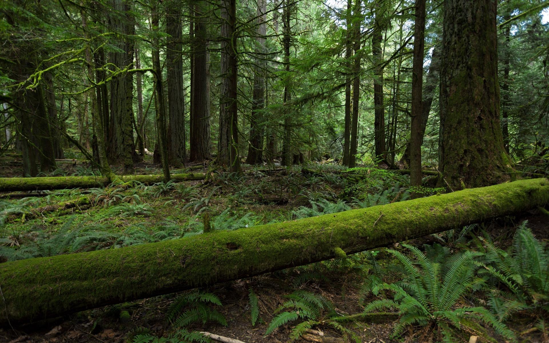forest wallpaper moss green