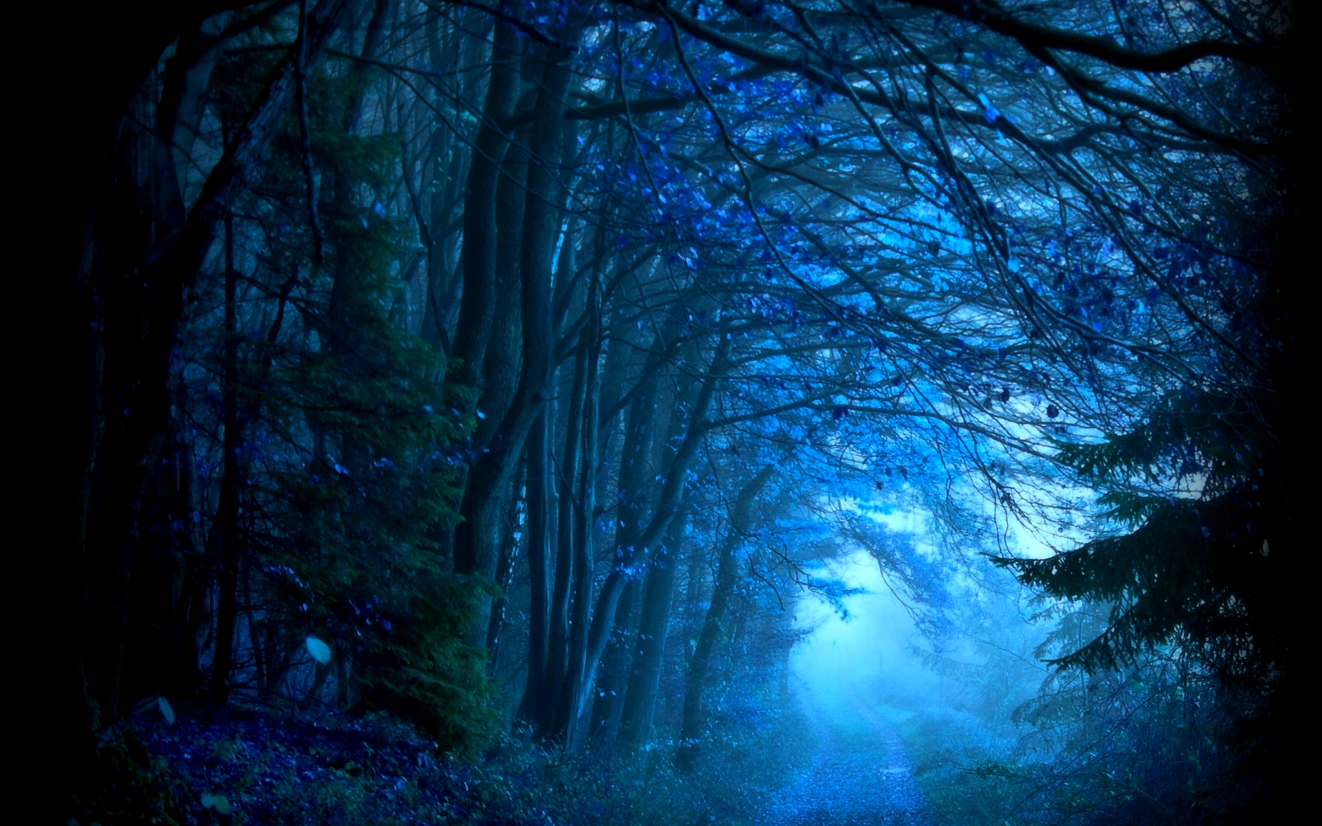 forest wallpaper night