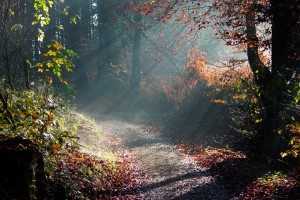 forest wallpaper road
