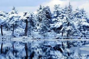forest wallpaper snow winter