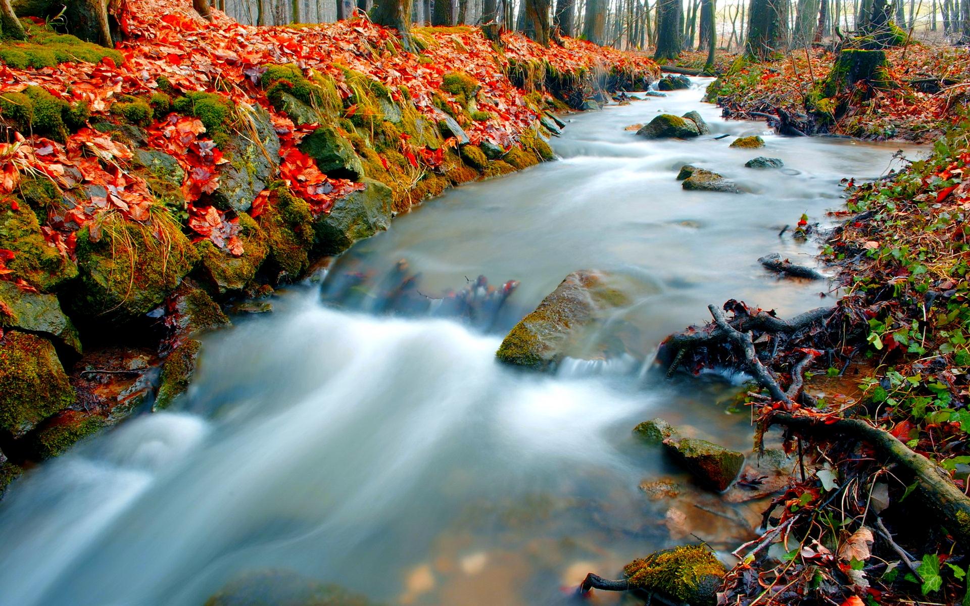 forest wallpaper stunning