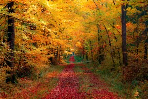 forest wallpapers 1280x800 autumn