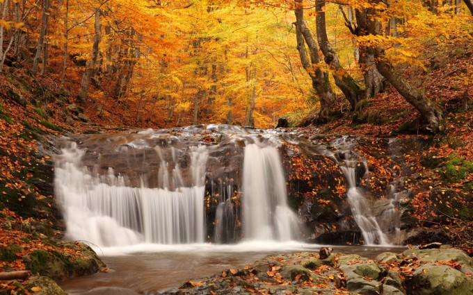 forest waterfall wallpaper hd