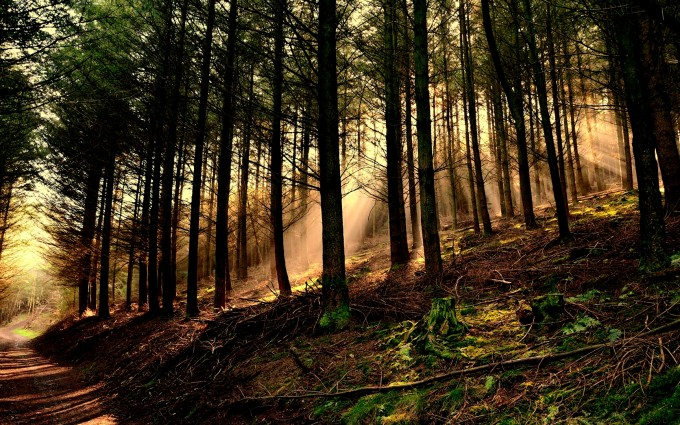 forests hd wallpapers sun