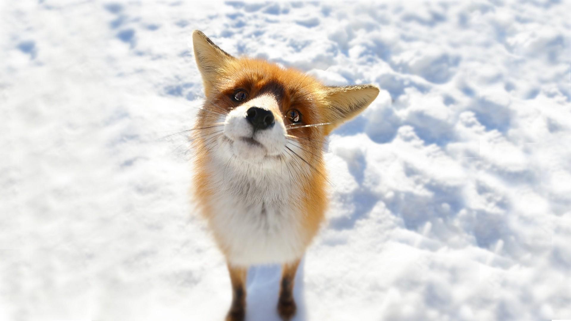 fox funny