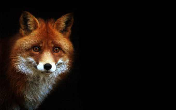 fox images