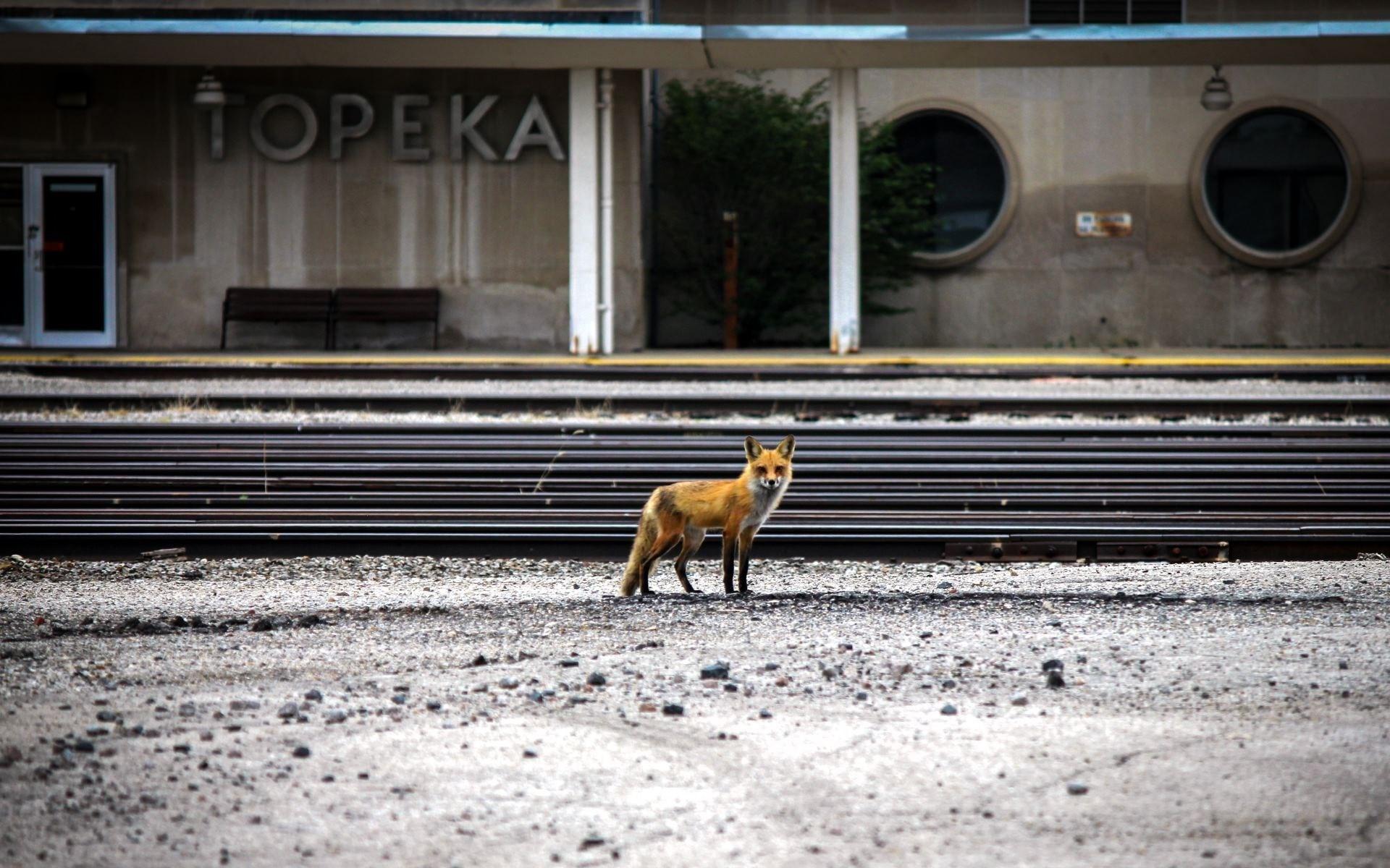 fox photography