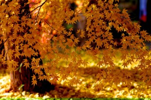 free autumn wallpaper for desktop