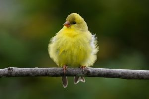 free bird image