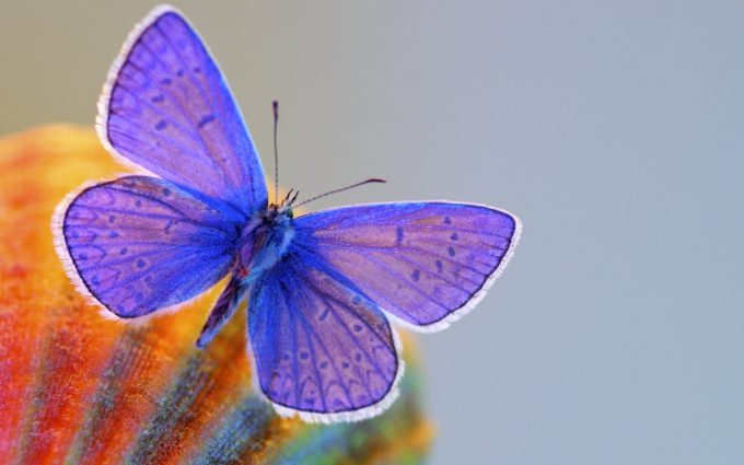 free butterfly wallpaper download