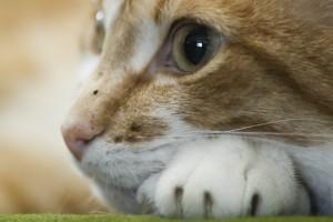 free cat wallpaper for desktop