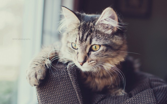 free cat wallpapers download