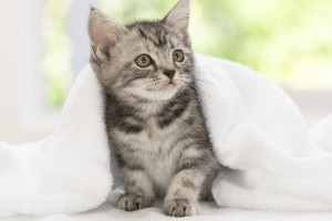 free cute cat wallpapers