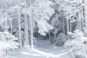 free desktop winter wallpaper